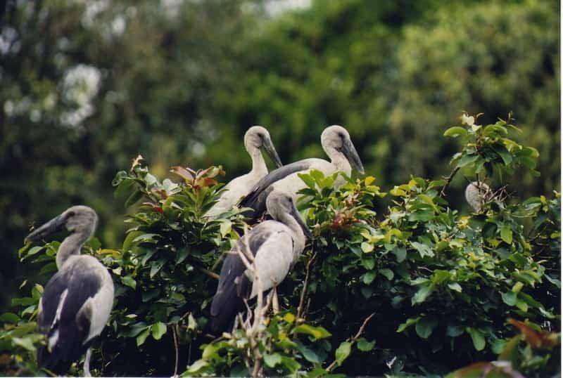 Gorgeous birds at the Karnala Bird Sanctuary