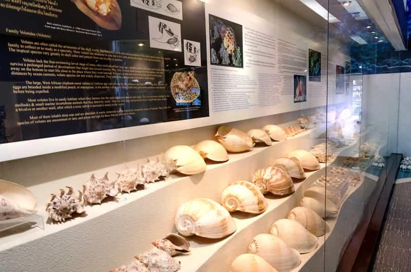 Shell Museum, Diu Islands