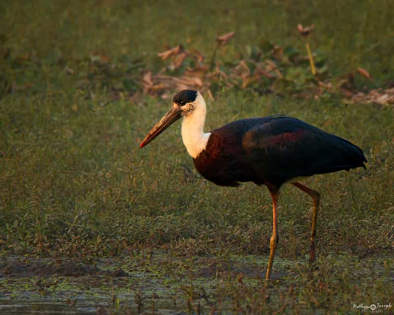 Surajpur Bird Sanctuary