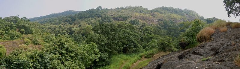 The vast expanse of the Sanjay Gandhi National Park