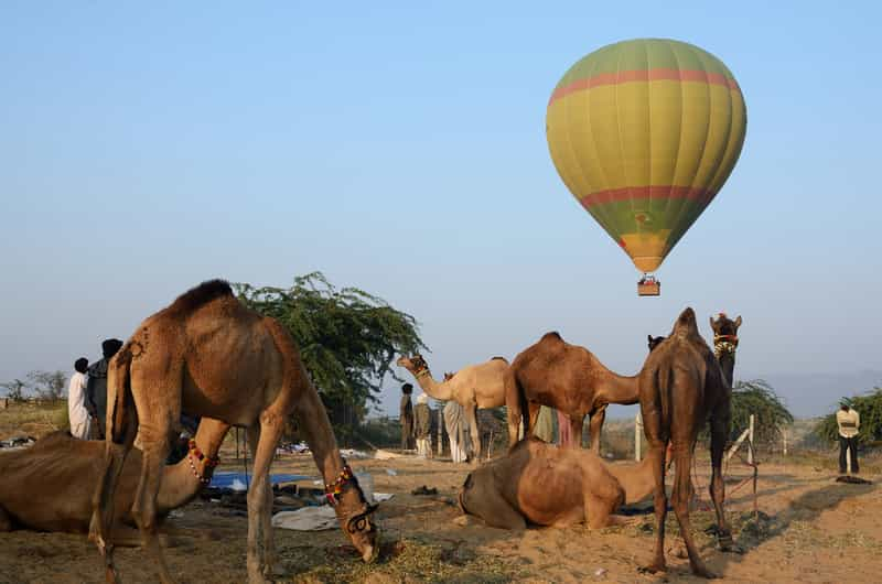 Adventure Desert Camp, Pushkar