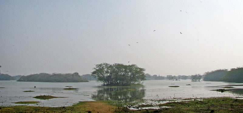 Bird Sanctuary at Sultanpur
