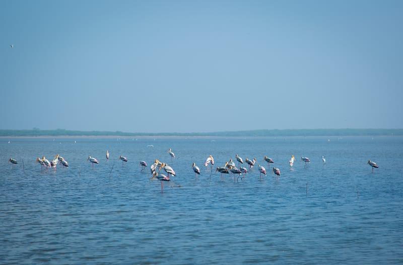 Pulicat Lake