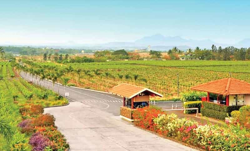 Road to Sula Vineyards