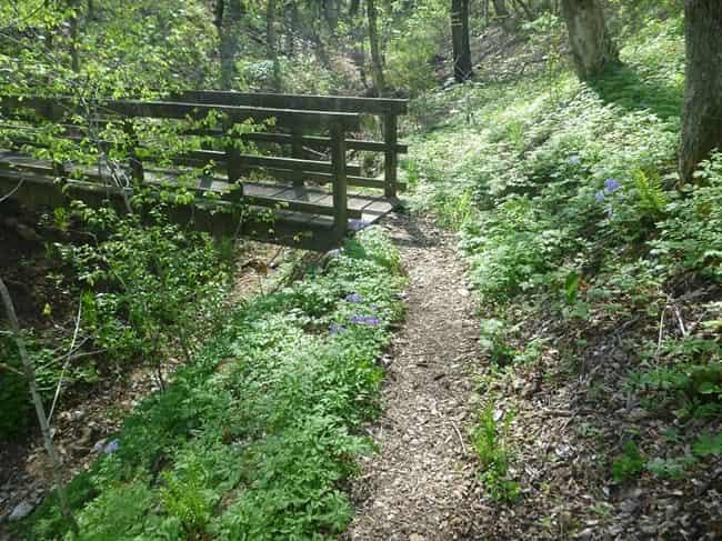 The Gilbert Trail is a great trekking spot in Parwanoo