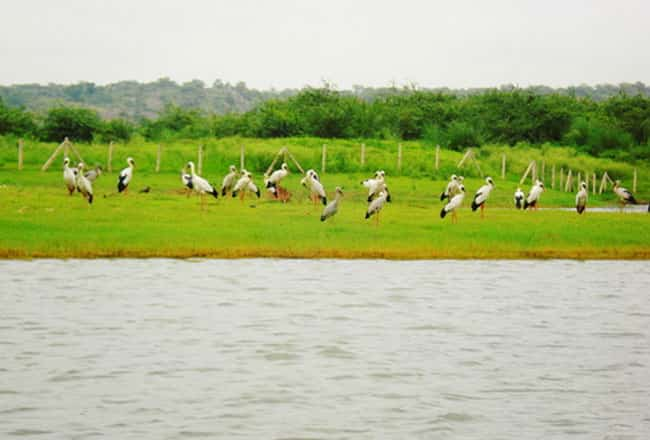 The Sohna Lake in Gurgaon is a great place for a nice relaxed outing.