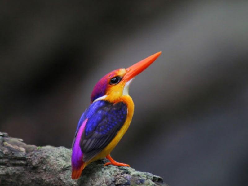 A bird at the Sanjay Gandhi National Park