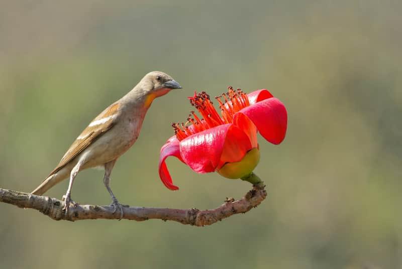 Bird Sanctuary in Mumbai, 12 Bird Sanctuaries Near Mumbai
