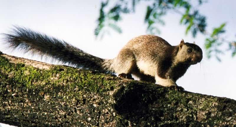Bhimashankar Wildlife Sanctuary, Bhimashankar