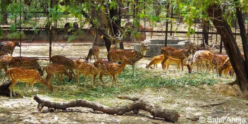 The Deer Park is a peaceful hangout area in Delhi