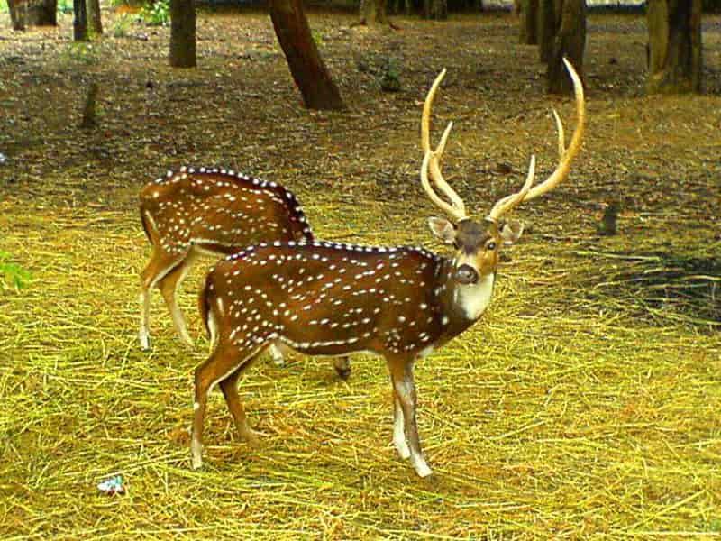 Sagareshwar Deer Park, Tupari
