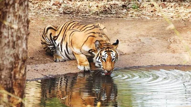 Sahyadri Tiger Reserve, Koyna