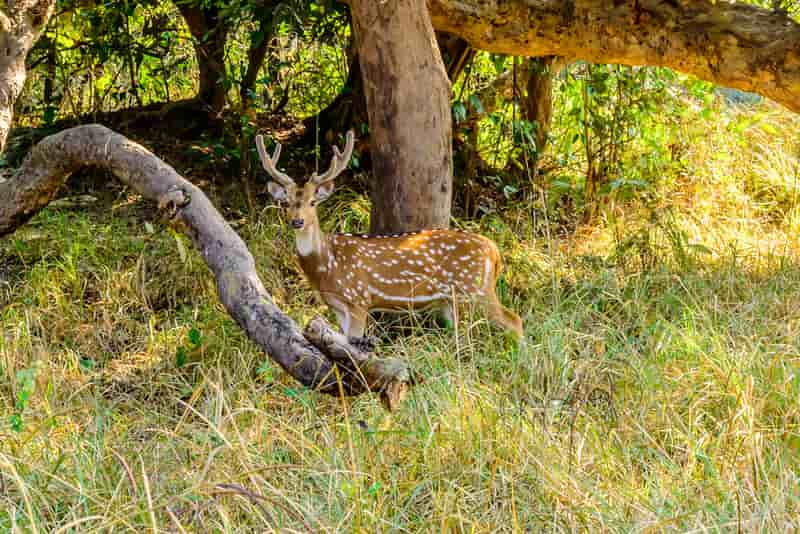 Rajaji National Park