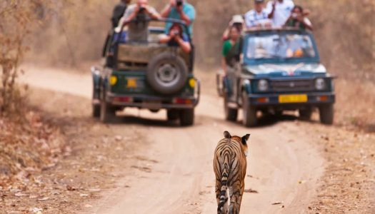 15 Top Things to Do in Nagpur