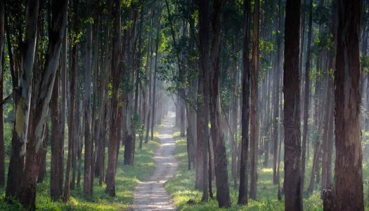 3 Exciting Routes for a Bangalore to Wayanad Road Trip