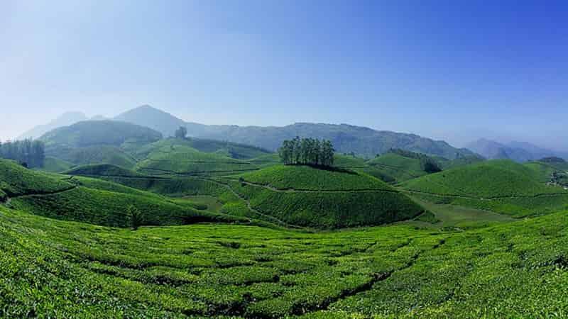 Lush Green Rolling Hills At Munnar