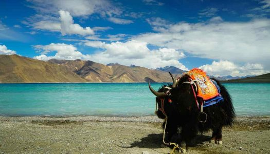 Flights, Stay, Treks: The Total Cost of a Ladakh Trip