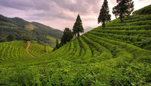 14 Hill Stations Near Chennai You'll Want To Visit More Than Once