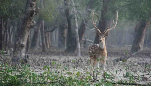The Most Picturesque Tourist Places Near Kolkata Within 300 kilometres