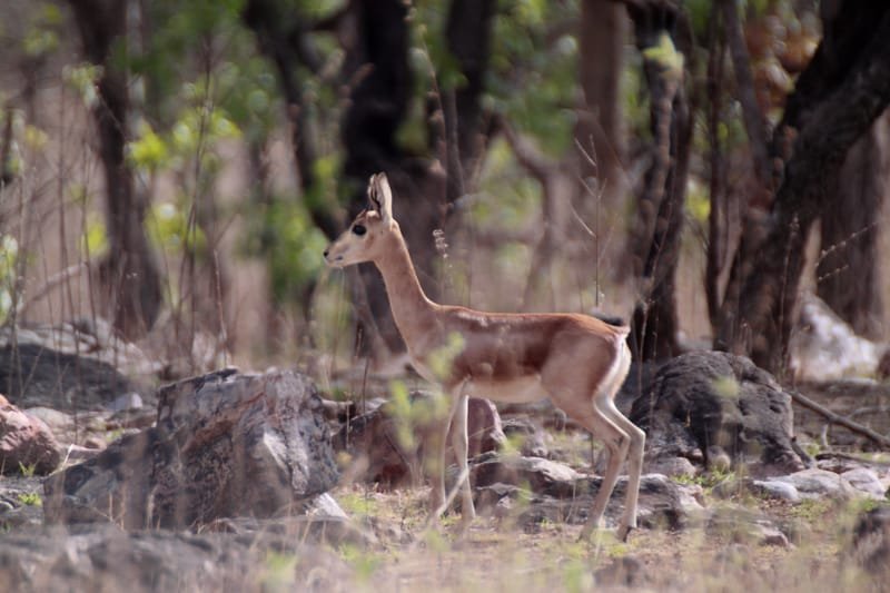 Gajner Wildlife Sanctuary