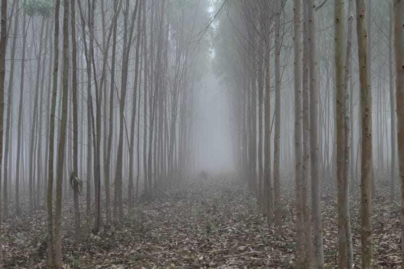 Lambasingi fog