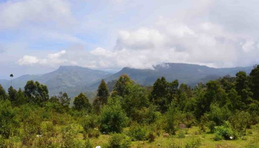 Best Places To Visit Near Kodaikanal For An Extended Holiday
