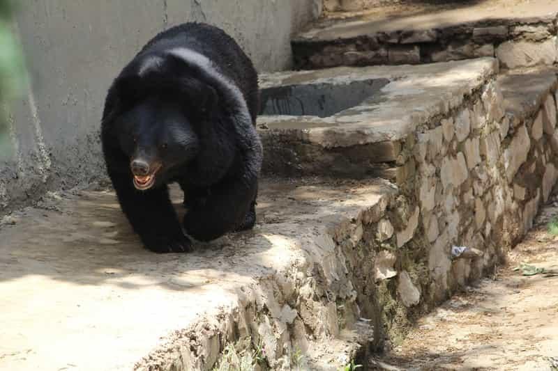 Bears at the Daroji Sloth Bear Sanctuary