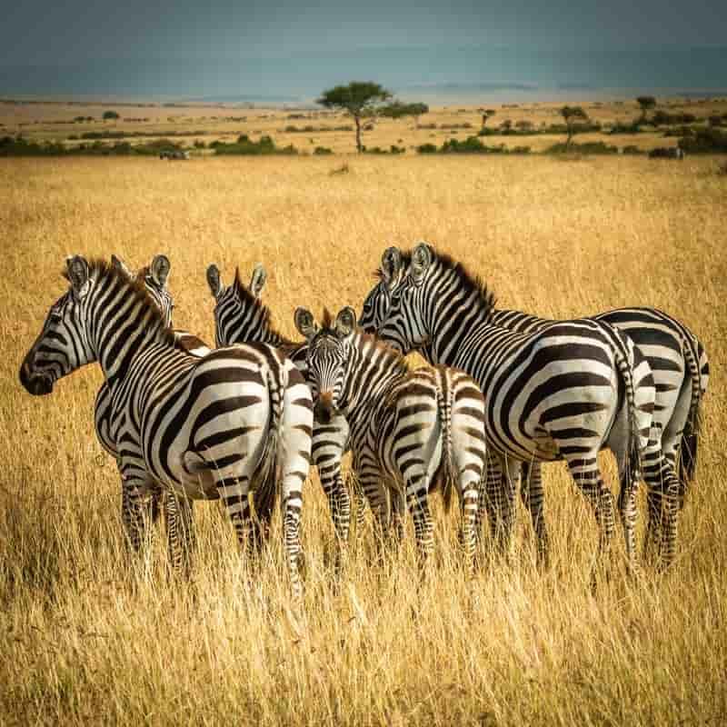 Take a Safari in Kenya