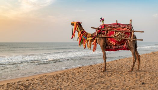 10 Amazing Places to Visit in Puri To Admire the True Essence of This Place